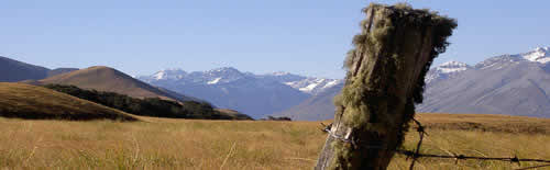 High country accommodation & Red Stag hunting in the Southern Alps
